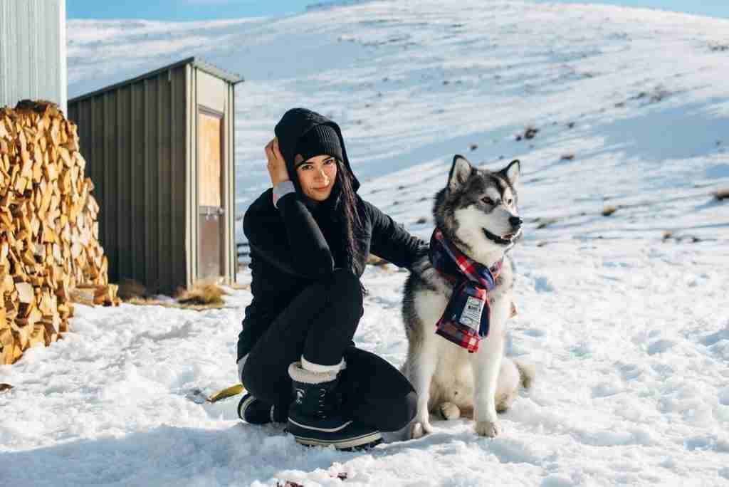 Sled Dog at Meadow Hut Snow Farm